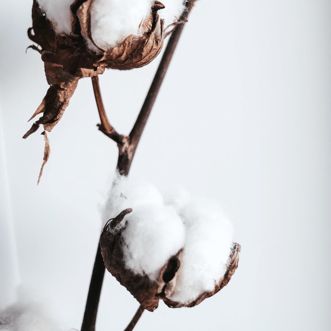 coton-tissu-ameublement